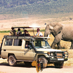 6 Days Luxury Family Safari To Tanzania