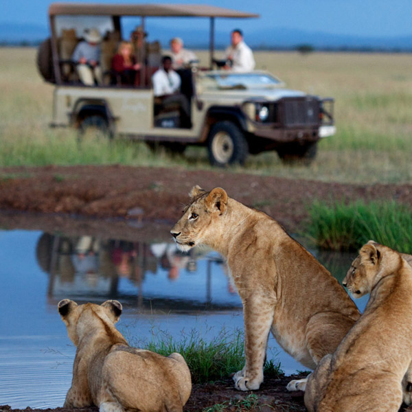 10 Days Luxury Wildlife Safari in Tanzania